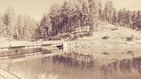 Jeziorny Poinsett Obraz Royalty Free