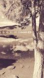 Jeziorny Poinsett Obrazy Stock