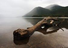 Jeziorny Rotoiti Obraz Royalty Free