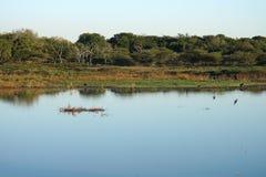 Jeziorny Swaziland park narodowy fotografia stock
