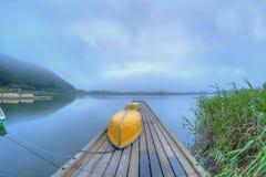 Jeziorny Tanukiko -2 Fotografia Royalty Free