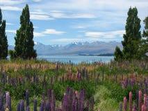 Jeziorny Tekapo, Nowa Zelandia Zdjęcia Royalty Free