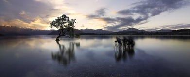Jeziorny tekapo wanaka drzewo zdjęcia stock