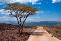 Jeziorny Turkana, Kenja fotografia royalty free