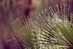 Jeziorny ulistnienie - rośliny życie przy Agua Caliente Obrazy Stock