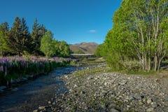 Jeziorny Wakatipu, krajobraz Nowa Zelandia Fotografia Stock