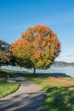 Jeziorny Waszyngton - drzewo 2 Fotografia Royalty Free