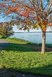 Jeziorny Waszyngton - gąski 4 Fotografia Stock