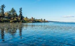 Jeziorny Waszyngton - linia brzegowa 8 Obrazy Royalty Free