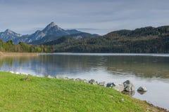 Jeziorny Weissensee z kaczką w bavaria zdjęcie stock