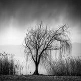 Jeziorny widok z drzewem Zdjęcie Royalty Free