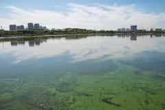 Jeziorny zanieczyszczenie Obrazy Royalty Free