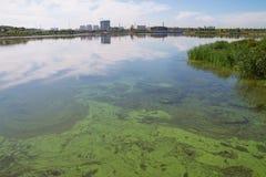 Jeziorny zanieczyszczenie Zdjęcia Royalty Free