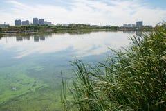 Jeziorny zanieczyszczenie Obraz Stock