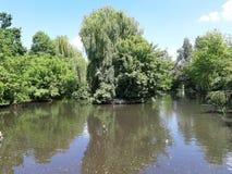 Jezioro żółwie zdjęcia royalty free