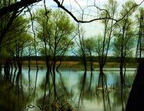 Jezioro. Zdjęcie Royalty Free
