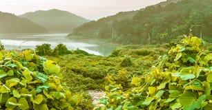 Jezioro boczna scena z górami i zielonymi roślinami Fotografia Royalty Free