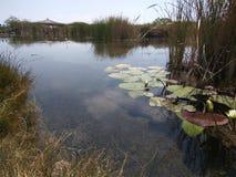 jezioro cicho Zdjęcia Royalty Free