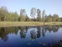 Jezioro drewna obraz royalty free
