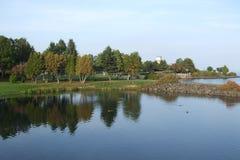 Jezioro & drzewa Obrazy Stock