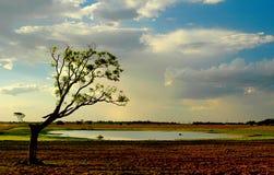 jezioro drzewo Obrazy Stock
