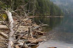 jezioro drzewo nie żyje Zdjęcia Royalty Free