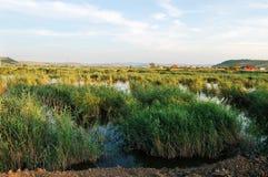 jezioro dziki Obrazy Stock
