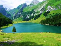 jezioro, góra, krajobraz, woda, natura, góry, niebo, odbicie, błękit, las, lato, rzeka, zieleń, chmury, podróż, widok, tr Zdjęcie Stock