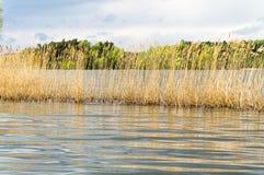Jezioro i las Obrazy Stock