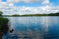 Jezioro i las Fotografia Royalty Free