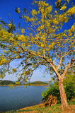 Jezioro i niebieskie niebo Zdjęcie Stock
