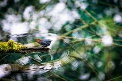 Jezioro i ptak w Jiuzhaigou dolinie, Sichuan, Chiny zdjęcie royalty free