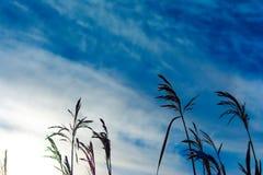 Jezioro i trawa Zdjęcia Stock