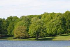 Jezioro i warkocz obrazy stock
