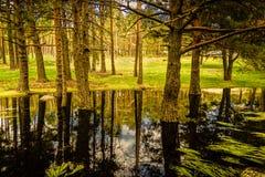 Jezioro jak lustro dla drzew w Canencia obraz stock