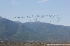 Jezioro Kerkini Serres Grecja Europa zdjęcie royalty free