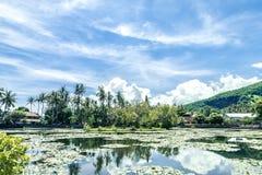 Jezioro lotuses za zachód od przy tropikalną wyspą Bali, Indonezja zdjęcie stock