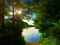 Jezioro między drzewami Obrazy Stock