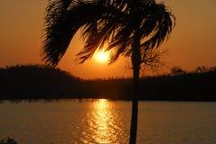 jezioro nad zmierzchu palmowym drzewem Zdjęcia Royalty Free