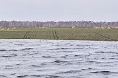 Jezioro ogniska w trawę krajobrazu dużych pierwszoplanowa orientacji szarość kolory Chmurna pogoda Fotografia Stock