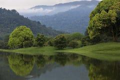 Jezioro ogród Zdjęcia Royalty Free