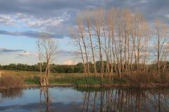 Jezioro otaczający polami i lasem Obraz Stock