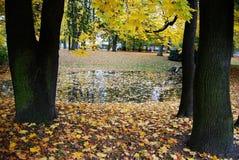 Jezioro podczas jesieni Obraz Stock