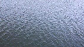 Jezioro powierzchnia przy naturą zdjęcie wideo