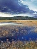 Jezioro, przerastający z trawą zdjęcie stock