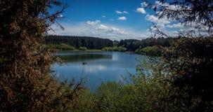 Jezioro przez zwartego lasu zdjęcie royalty free