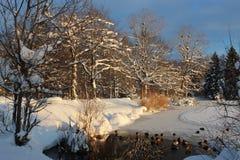 Jezioro przy zimą Zdjęcia Stock