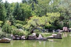 Jezioro przy zoo Zdjęcia Stock