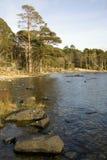 jezioro rock drzewa zdjęcia royalty free
