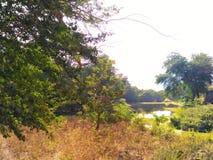 Jezioro strona Zdjęcia Royalty Free